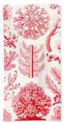 Examples Of Florideae From Kunstformen Der Natur Beach Towel by Ernst Haeckel