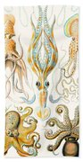 Examples Of Various Cephalopods Beach Towel