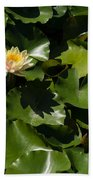 Exotic Colored Waterlilies In The Hot Mediterranean Sun Beach Towel
