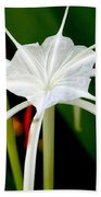 Exquisite Spider Lily Beach Towel