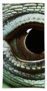 Eye Of A Common Iguana Iguana Iguana Beach Towel