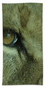 Eye Of The Lion Beach Towel