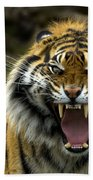Eyes Of The Tiger Beach Towel by Mike  Dawson