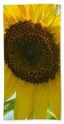 Face To Face With A Sunflower Beach Towel
