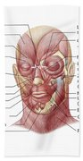 Facial Muscles Of The Human Face Beach Towel