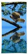 Falcon Reflect Beach Towel