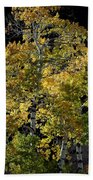 Fall Aspen Beach Towel
