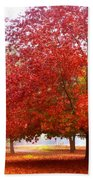 Fall Colored Trees Beach Towel