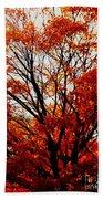 Fall Colors Cape May Nj Beach Towel