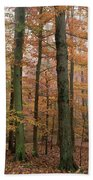 Fall Colors In Catoctin Mt. Park Beach Towel