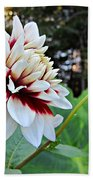 Fall Dahlia Beach Towel