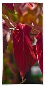 Fall Dogwood Leaves Beach Towel