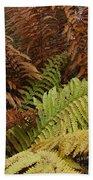 Fall Ferns Acadia National Park Img 6355 Beach Towel
