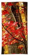 Fall Forest Detail Beach Towel