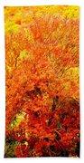 Fall In Full Bloom Beach Towel