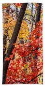Fall In The Forest Beach Towel