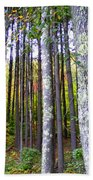 Fall Ivy In Pine Tree Forest Beach Towel