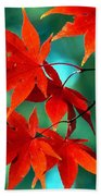 Fall Leaves In All Their Glory Beach Towel