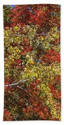 Fall Leaves In So Cal Beach Towel