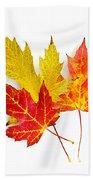 Fall Maple Leaves On White Beach Towel