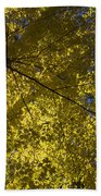 Fall Maple Beach Towel