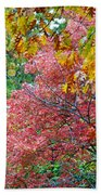 Fall Tree Leaves Beach Towel