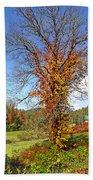 Fall Trees 5 Of Wnc Beach Towel