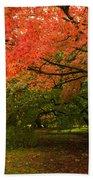 Fall Trees Beach Towel