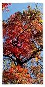 Fall Trees Of Wnc Beach Towel