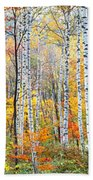 Fall Trees, Shinhodaka, Gifu, Japan Beach Towel