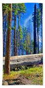 Fallen Sequoia In Mariposa Grove In Yosemite National Park-california Beach Towel