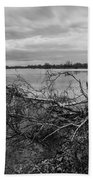 Fallen Trees At The Lake Beach Towel