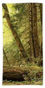 Falling Trees In The Rainforest Beach Towel