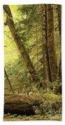 Falling Trees In The Rainforest Beach Sheet