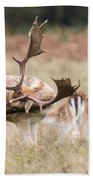 Fallow Deer - Amazing Antlers Beach Towel