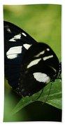 False Zebra Longwing Butterfly Beach Towel