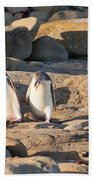 Family Of Nz Yellow-eyed Penguin Or Hoiho On Shore Beach Towel