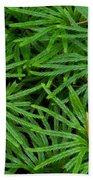 Fan Club Moss Foliage Beach Towel