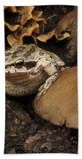 Fat Frog Beach Towel by Jean Noren