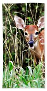 Fawn In The Grass Beach Towel by Marty Koch