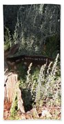 Fawn Front Yard Divide Co Beach Towel