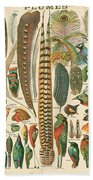 Feather Plumes-a Beach Towel