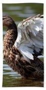 Feather Spread - Female Mallard Beach Towel
