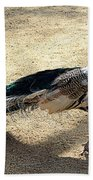Feathers Of Many Colors Beach Towel