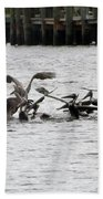 Feeding Frenzy Beach Towel