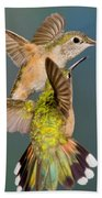 Female Broad-tailed Hummingbird Beach Towel