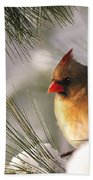 Female Cardinal Nestled In Snow Beach Towel