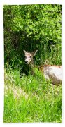 Female Deer Resting Beach Towel