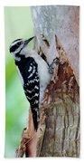 Female Downy Woodpecker Beach Towel