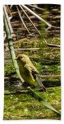 Female Gold Finch Drinking Beach Towel